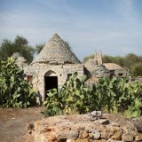 Typical trulli houses in the olive fields in Puglia