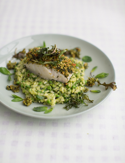 Herb crusted cod with pea risotto anne 39 s kitchen for Herb cod recipe